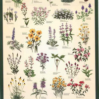 North American Wildflowers Poster 24x36