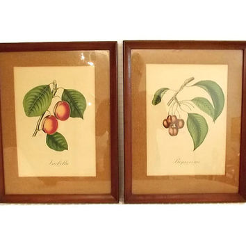 Vintage Mid Century French Botanical Prints - S Z Lucas - Paris Etching Society - Burlap - Fruits - Framed Art - Grapes - Cherries