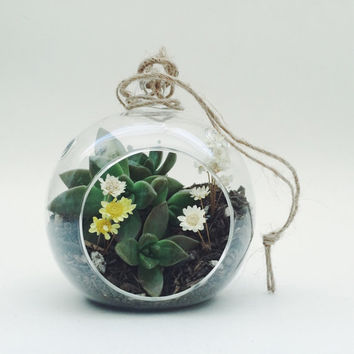 Small Hanging Succulent Terrarium Kit; Terrarium Kit; Succulent Kit; Glass Terrarium; Hanging Terrarium; Tabletop Terrarium; Home Decor