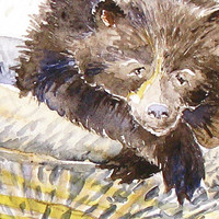 Bear Melancholy Zoo Wildlife Art Print