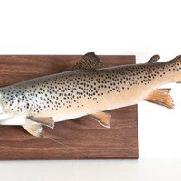 Vintage Real Taxidermy Mounted Brown Trout, Fish on Plaque Fly Fishing Mancave Hunting Fishing Home Decor, 19 INCH