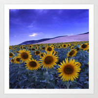 Sunflowers At Blue Hour . Square by Guido Montañés