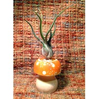 Tilla Critters Magic Mushroom One of a Kind Air Plant Creations from Chili Fiesta HandiWorks
