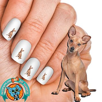 Miniature Pinscher tan Nail Art (NOW 50% MORE FREE)