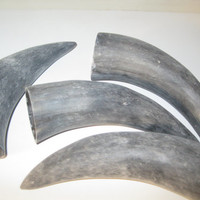 4 Cow horns...unfinished and raw  ......E4A...cow horn...buffalo horn....bull....steer....goat ...sheep...ram..ox