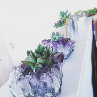 Succulents in Crystal Planters