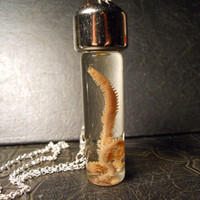 Real Preserved Sand Worm Ocean Wet Specimen Taxidermy Necklace