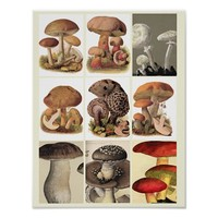 Mushrooms Fungi Plants Botanical Art Poster