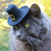 Pilgrim Cat Hat - Wool Felted Pet Hat - Thanksgiving Celebration