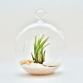 Plant Orb/ Terrarium Glass Hanging Vase | High Quality Hot Clear Round 1 Hole |Succulent Flower Plant Stand Home Office Wedding Decor Garden