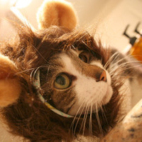 Monkey Hat for Cats