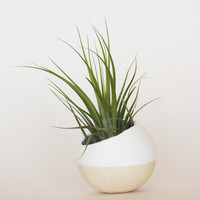 White Air Plant Pot with Kolbii Air Plant