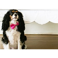 Pink Dog Bow tie wedding, Dog Birthday Accessory, Love Pink, dog gift