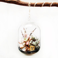 Black Hanging Glass Bubble Succulent Terrarium
