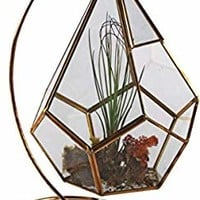 """Circleware 32504 Terraria Plant Glass Terrarium with Gold Metal, Stand Home Decor Flower Balcony Display Box and Garden Gifts 7.87"""" x 10.24"""", Triangle 7.8x10.2"""