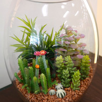 "Du Pot Assorted Cactus in Glass LG 11""H"
