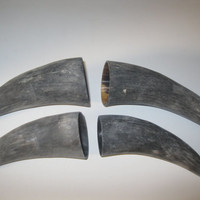 4 Cow horn tips...E4B... Natural colored, unfinished cow horns...buffalo horn....bull....steer....goat ...sheep...ram..ox