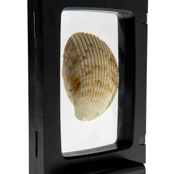 Z-Access 3D Display Frame