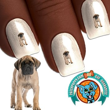 English Mastiff Big Baby Nail Art Decals (Now! 50% more FREE)