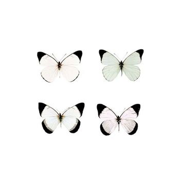White and Pastel Butterfly Photography