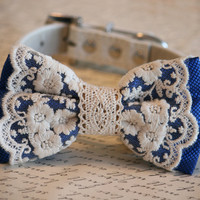 Royal Blue Lace Dog Bow Tie, Lace Bow, Vintage wedding, Rustic, Bohemian, Proposal idea, Some thing blue