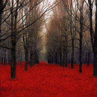 Red Nature Photography Print Red Wall Decor Rustic Woodland Forest, Black, Fiery Autumn