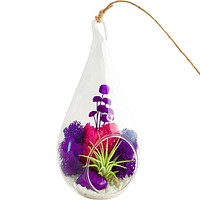 Bliss Gardens Air Plant Terrarium with Moss / Flowers / Agate / Purple Passion