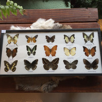 15 Ryker Mounted Butterflies