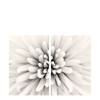 "Art Addiction White Floral Closeup II Set of 2, Multi, 36"" x 24"" at MYHABIT"