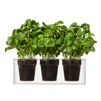 Boskke Cube 3 Small Clear Plant Pot