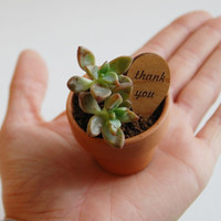 Mini Thank You Plant Markers  Alder Wood by AFlutteredCollection