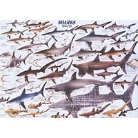 Sharks Animal Education Poster 27x39