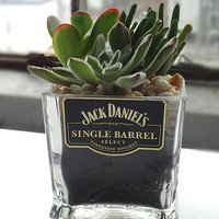 Rehabulous Jack Daniels Single Barrel Succulent Garden Bottle | zulily
