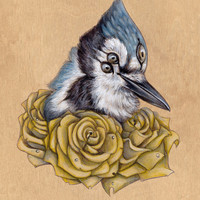 Blue Jay with Yellow Roses  PRINT