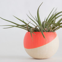 Melon Air Plant Pot (No Plant)