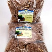 """Certified Organic Hard Red Wheat Sprouting Seed: 10 Pre-Measured Bags for 10""""x20"""" Trays (Approx 10 Lb) For Growing Wheatgrass to Juice, Grind for Flour & Bread, Ornamental Wheat Grass - Non-GMO"""