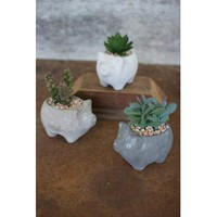 Set Of 3 Artificial Succulents In Cement Pig Planters