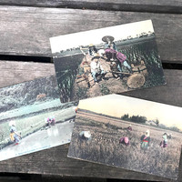 Set of 3 Antique Japanese Postcards, Rice Farmers, Hand Tinted Carte Postale, Unused, Japan Souvenirs, circa early 1900s