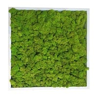 Moss Tile Wall Decor