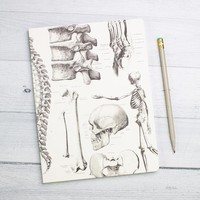 Skeleton Anatomy Softcover Notebook - Dot Grid