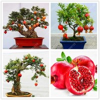30 pcs bonsai pomegranate seeds very sweet Delicious fruit seeds,succulents Tree seeds mini bonsai for home gift