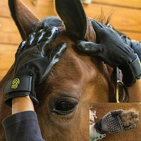 Amazing HandsOn Grooming Gloves For Horses and Dogs