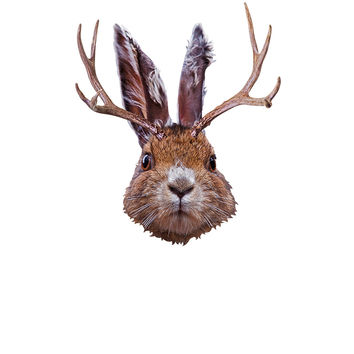 Jackalope Mount Wall Decal