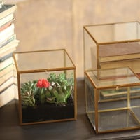 Set of 3 Square Glass Display Boxes - Antique Brass Finish