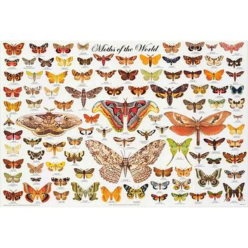 Moths Lepidoptera Education Poster 24x36