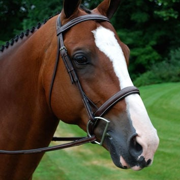 Red Barn Fusion Uni-Crown Bridle with Crank Noseband