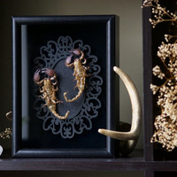 Emperor Scorpion Molts - Insect Shadow Frame Display - Museum Bug Glass Home decor