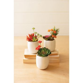 Set Of 3 Artificial Succulent Plants In A White Pot