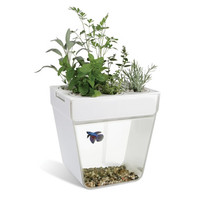 The Aquaponic Fish Tank