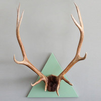 XXL Vintage Triangle Mounted 12 Point Elk Antler by castandcrew